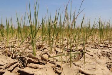 ภัยแล้งพ่นพิษกดรายได้เกษตรลุ้นปีนี้ขยับ5%