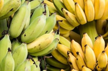 กล้วยน้ำว้า กับสุขภาพ และสุขภาพช่องปาก แก้ปากเหม็น