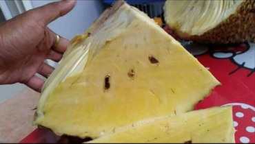 ขนุนไร้เมล็ด ของสวนเกษตรศรีนวล ปราจีนบุรี