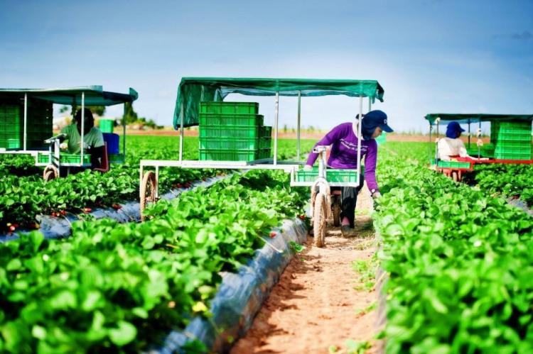 พลิกฟื้นสังคมเกษตรไทย สู่ผู้นำโลกด้วย Agitech